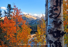 Fall in Rocky Mountain National Park (RondaKimbrow) Tags: autumn orange mountain lake fall yellow landscape photography gold colorful nps fineart trunk rockymountains rmnp longspeak aspen estespark homedecor rockymountainnationalpark bearlake officedecor coloradofall rondakimbrowphotography