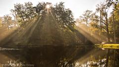 Misty morning ... (Alex Verweij) Tags: sun mist misty canon 5d bos groeneveld zon baarn zonnestralen mistbank alexverweij bankt
