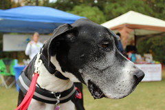 """Dogs, dog park, richmond • <a style=""""font-size:0.8em;"""" href=""""http://www.flickr.com/photos/31682982@N03/21902527473/"""" target=""""_blank"""">View on Flickr</a>"""