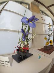 Iris, Stock & Crabapples (nano.maus) Tags: fisheye lauritzengardens japaneseflowerarrangement omahabotanicalsociety japaneseambiencefestival