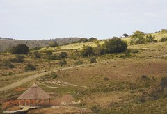 SinTitulo (Lu Rotela) Tags: trees houses uruguay photography arboles paisaje campo sierras gree choza rocha