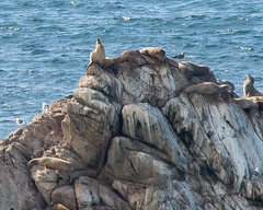 king of the hill (nosha) Tags: ocean sea beautiful beauty nosha