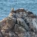 king of the hill (nosha) Tags: ocean sea beautiful beauty nosha