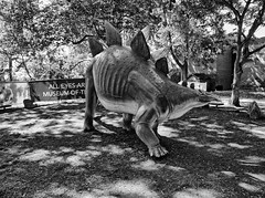 Cleveland Museum of Natural History 08-21-2015 - Stegosaurus Statue 1 HDR BW (David441491) Tags: blackandwhite bw statue dinosaur stegosaurus hdr clevelandmuseumofnaturalhistory