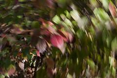 _GQP2937a (Giandomenico GQphoto.it) Tags: plants color verona colori gq external esterno veneto vivaio pescantina giandomenico nikond700 efettomoso effectdriven