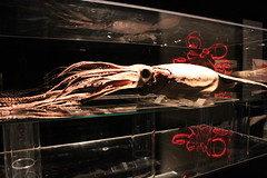 Science World - October 15, 2015 (rieserrano) Tags: squid bodyworlds plastination