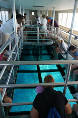 reef madness (rovingmagpie) Tags: coral florida reef keylargo glassbottomboat johnpennekamp johnpennekampcoralreefstatepark reefmadness keylargoprincess sfi2015