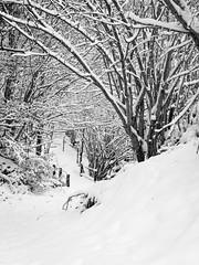 DSC_0030 (Simon Buchou) Tags: mountain snow ski tree montagne trek rando arbres alpine neige paysages pyrnes aspe barn lescun