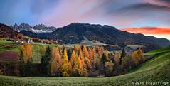Val di Funes - Dolomiti (beppeverge) Tags: autumn mountain alps fall foliage autunno alpi montagna unescoworldheritage dolomites dolomiti altoadige dolomiten italianlandscape sudtirol ladino larici beppeverge