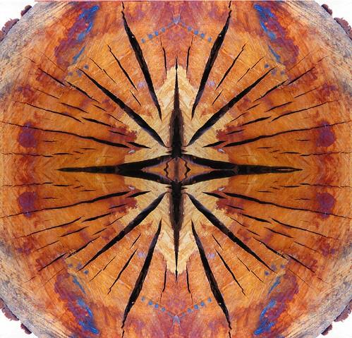 Eucaliplto caleido-fractal.