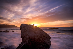 Sitting on a Sunstar (Maddog Murph) Tags: seagull gull bay san francisco marshall beach baker sunset sunstar headlands ocean frothy mist waves water seascape