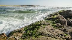 Paracas-47 (m.lencioni3) Tags: paracas peru perù quad ocean pacific pacifico oceano pellicano birds southamerica sony sonya7 fe35mmf28zazeisssonnart fe55mmf18zazeisssonnart konicaminolta1735mmf2845 tour travel trip gringotrail