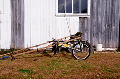 amish / stripped down horse ... (bluebird87) Tags: amish horse nikon d7000 chariot buggy