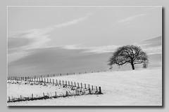 Tree in a Winter Field Mono