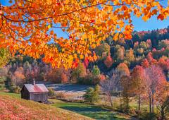SOUTH POMFRET, FARM (jlucierphoto) Tags: autumn fall vermont foliage barn leaves landscape serene plant tree outdoor