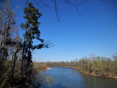 A view of the Congaree (Just Back) Tags: river flow water sc congaree swamp nature floodplain pine pinus trees calhoun tree bark science love botany phytology xylem air sun sky view see scene seen stream living landscape maple ash forest pines conifer