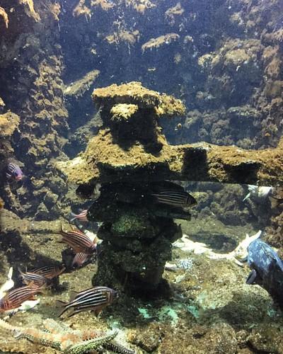 Love those fish! #aquarium