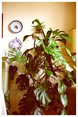 KL3M2678 (FR4GIL3) Tags: paris france sepia plante vegetation appartement couleur