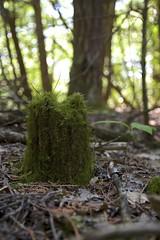 Mossy stump (JohnApix) Tags: tree green forest canon moss hiking trail stump manitoulinisland t4i sigma1750mm