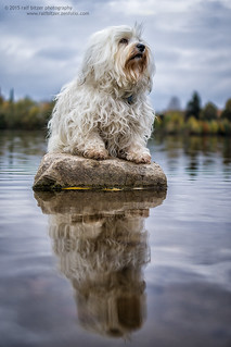 Ruler of the lake