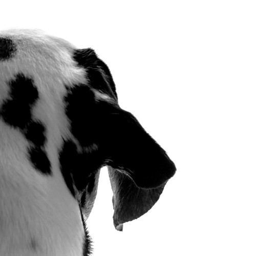 Negro sobre blanco :: Black on white :: Noir sur blanc ::: 20150915 1558