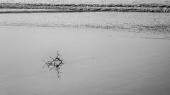 Driftwood (bhodaporel) Tags: ocean travel sea india abstract reflection beach water monochrome sand waves driftwood ripples tajpur