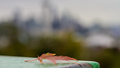 Leaf of Change: Fall colors from Kerry Park with Seattle skyline in bokeh (Brendinni) Tags: world life seattle people walking living leaf construction seasons working change spaceneedle kerrypark surviving seattlewa