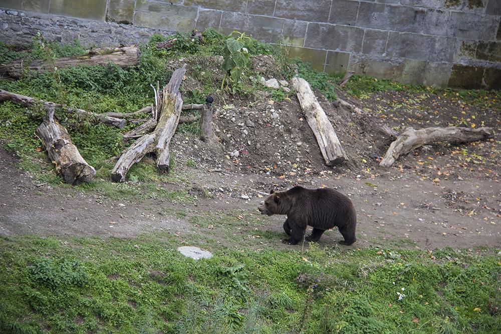 Ursos Bearpark