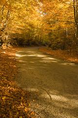 Autumn Road (Besim_Hakramaj) Tags: road autumn color fall leafs montenegro korita