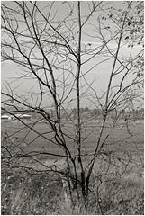 klausheide 25 (beauty of all things) Tags: trees bume flugplatz airfield nordhorn klausheide