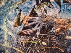 ❄️Frostwork❄️ (allyapa) Tags: autumn macro ice grass nokia lumia frostwork lumia830