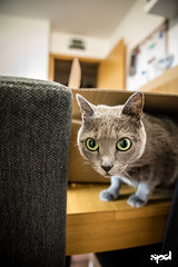 20151207 - Prova D750 (LOW) 05 (DAVIDE SPAGNA SPD) Tags: cats cat nikon d750 gatto gatti tamaron