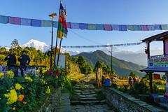 Annapurna South 7219m, Hiunchuli 6441m, Machapuchare 6993m (Poxxel) Tags: nepal annapurnasouth hiunchuli machapuchare pothana