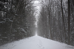 The path to Winter.. (Stella_Kar) Tags: christmas trees winter light usa white snow cold ice season frozen holidays path branches footprints freezing tunnel snowing upnorth magical northernmichigan