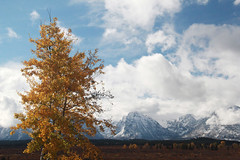 Fall into winter (RPahre) Tags: autumn fall winter aspen grandtetonnationalpark tetons grandtetons wyoming robertpahrephotography copyrighted donotusewithoutwrittenpermission