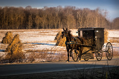 off to church (Christian Collins) Tags: clare michigan unitedstates us amish buggy sunday church travel sunny cold trotting horse canoneos5dmarkiv ef70200mmf4lusm