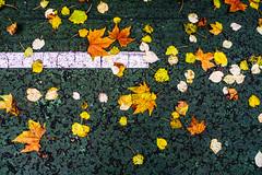 Otoño Urbano   ///   Urban Fall (Walimai.photo) Tags: color colour green verde yellow amarillo hoja leaf otoño autumn fall urban urbano line línea white blanco suelo floor parque park jesuitas salamanca spain españa lumix lx5 panasonic