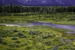 Beaver Ponds (woodchuckiam) Tags: beaverponds grandtetonnationalpark wyoming stream water grass shrubs trees mountains color scenic landscape woodchuckiam