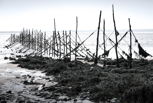Stake Nets, Wigtown Bay