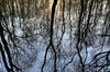 Reflections.. (Philip R Jones) Tags: trees branches woods reflection water lookingback reflecting ps