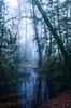 The lost world (SimonLea2012) Tags: colour light shapes silhouettes england uk unknown unseen atmosphere weather lake pool bog swamp alone lost mist fog
