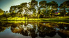 Its a new dawn... (dmunro100) Tags: adelaide river torrens lake southaustralia dawn sunrise city summer refections trees canon eos 80d canonefs1018mmf4556isstm