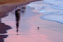 """Archive Tuesday 30 - """"Where's that man of mine gone now?"""" (odell_rd) Tags: tynemouth reflection dog coth5"""