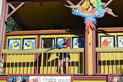 Macaw Show 15/12/2016 (s.kosoris) Tags: skosoris nikond3100 d3100 nikon tampa tampazoo people macaw bird animal