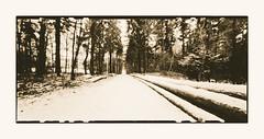 On a walk (zonevde) Tags: zeroimage zeroimage612b 6x12 acros xtol lith digitallith pinhole fujineopanacros epson4990