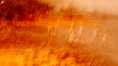Souls of Fire (www.jamespartridge.photo) Tags: apparitions crouching beach haunted wwwjamespartridgephoto art heatwave bushfire qld icm 56mm jamespartridgephotography hot death fire judgement nudgee queensland shepherds intense xpro1 loss suffering nineapparitions rocks ghosts fineart fujifilm grieve peace australia nightmare interpretive jamespartridge abandonment heat trees angels lostsouls brisbane waiting earth blaze scorched worship souls sun