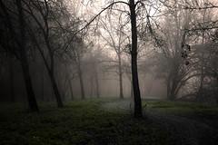 Le chemin (david49100) Tags: 2016 maineetloire villevêque arbres chemin d5100 décembre nikon nikond5100 path trees