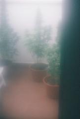 Garden (Mario Garcia T) Tags: werlisa colour 35 mm analogue photo xativa antique fujifilm 200