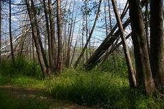 Stony Swamp Ottawa, Ontario Canada (nikname) Tags: trees landscape landscapes ontariocanada canadiantrees canadianforest canadianparks provincialparks stonyswamptrailottawaon swamps summer summerskies