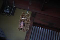 OJ6A9697.jpg (darumadaisuki) Tags: 枚方市 大阪府 日本